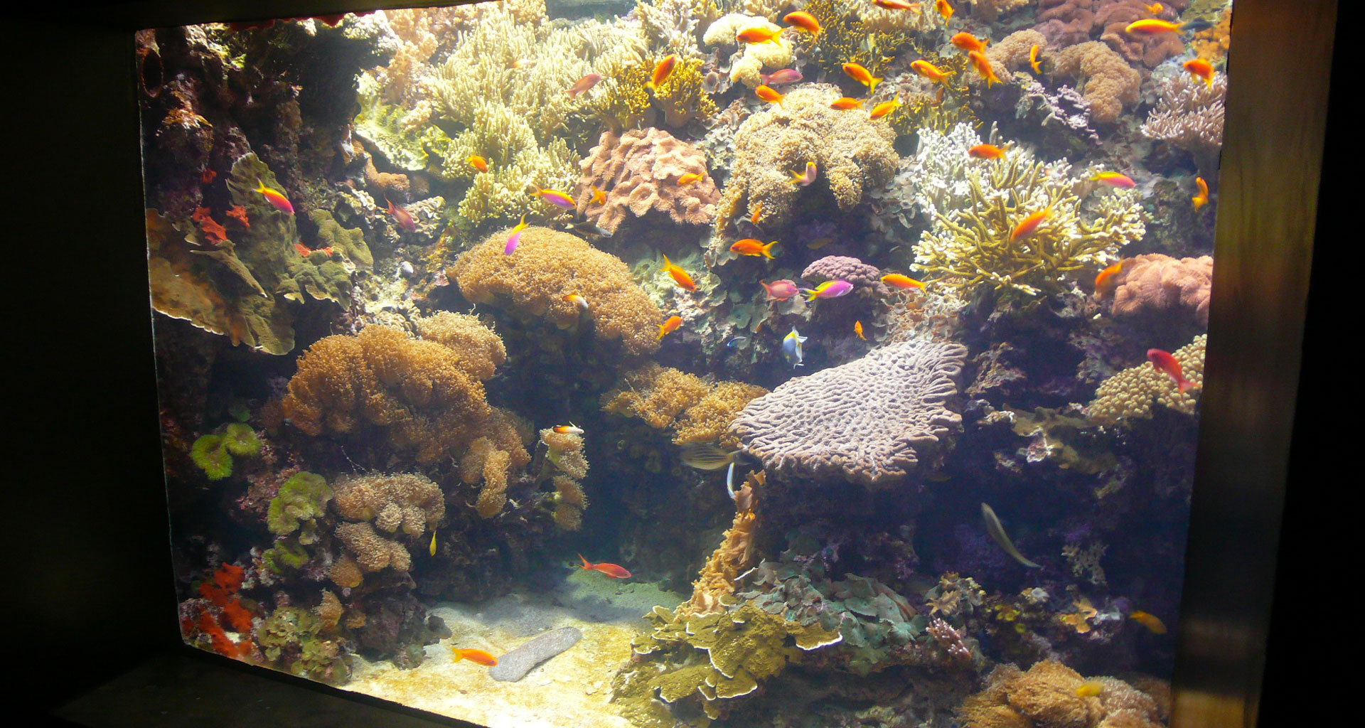 Aquariums   aab